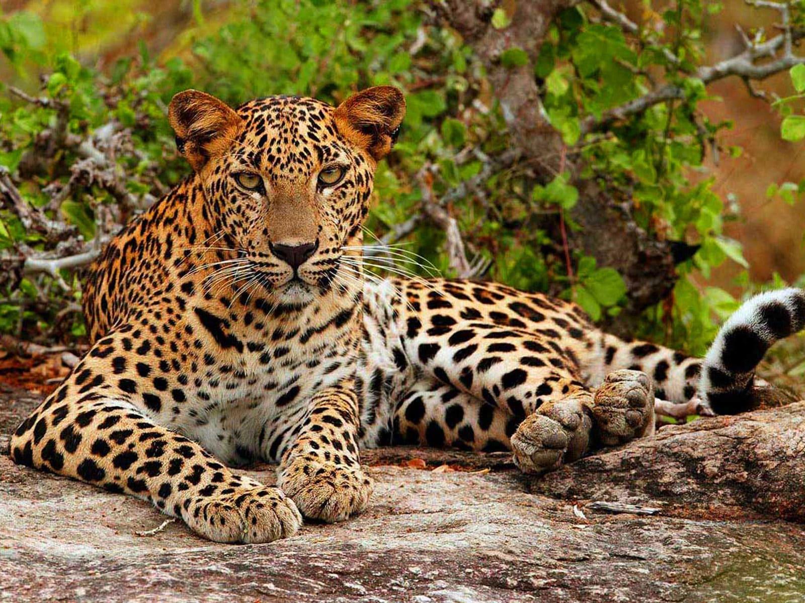 rondreis sri lanka hoogtepunt tissa yala national park 1