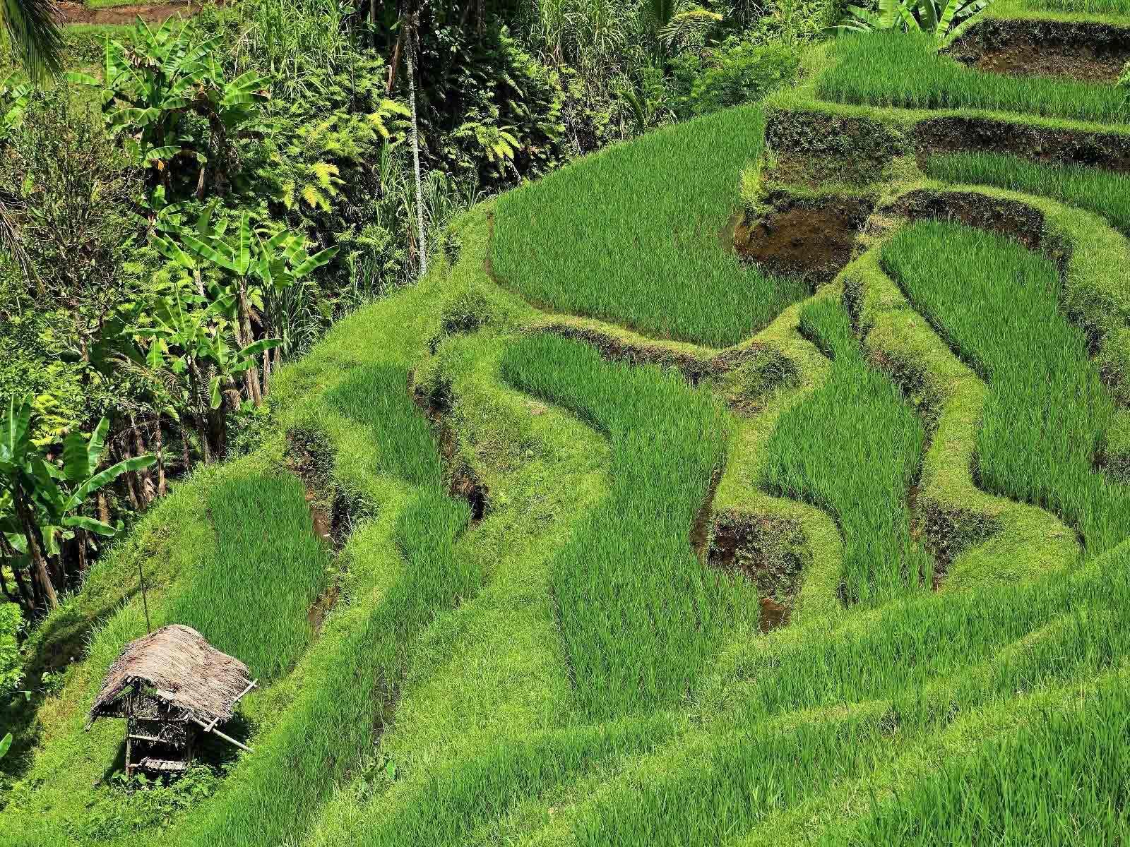 Rondreis Bali Munduk 7
