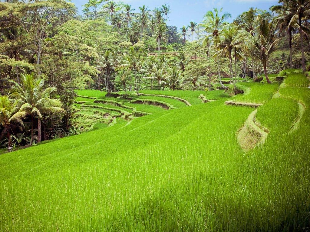 Sanda (Pupuan) | Rama Tours