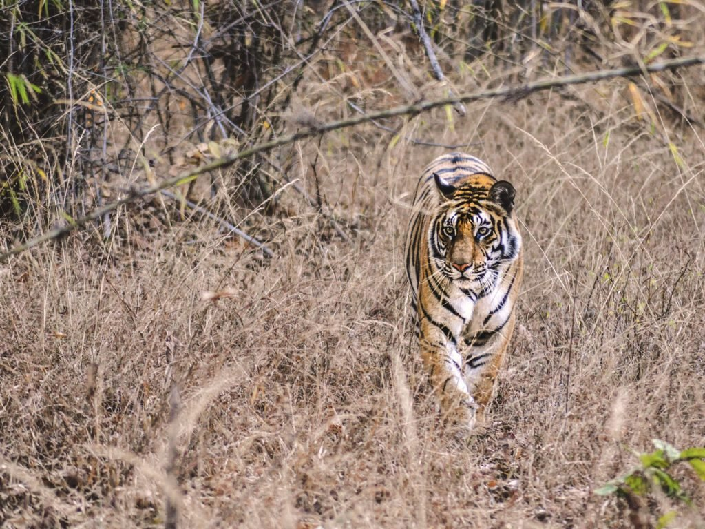 Bandhavgarh National Park | Rama Tours
