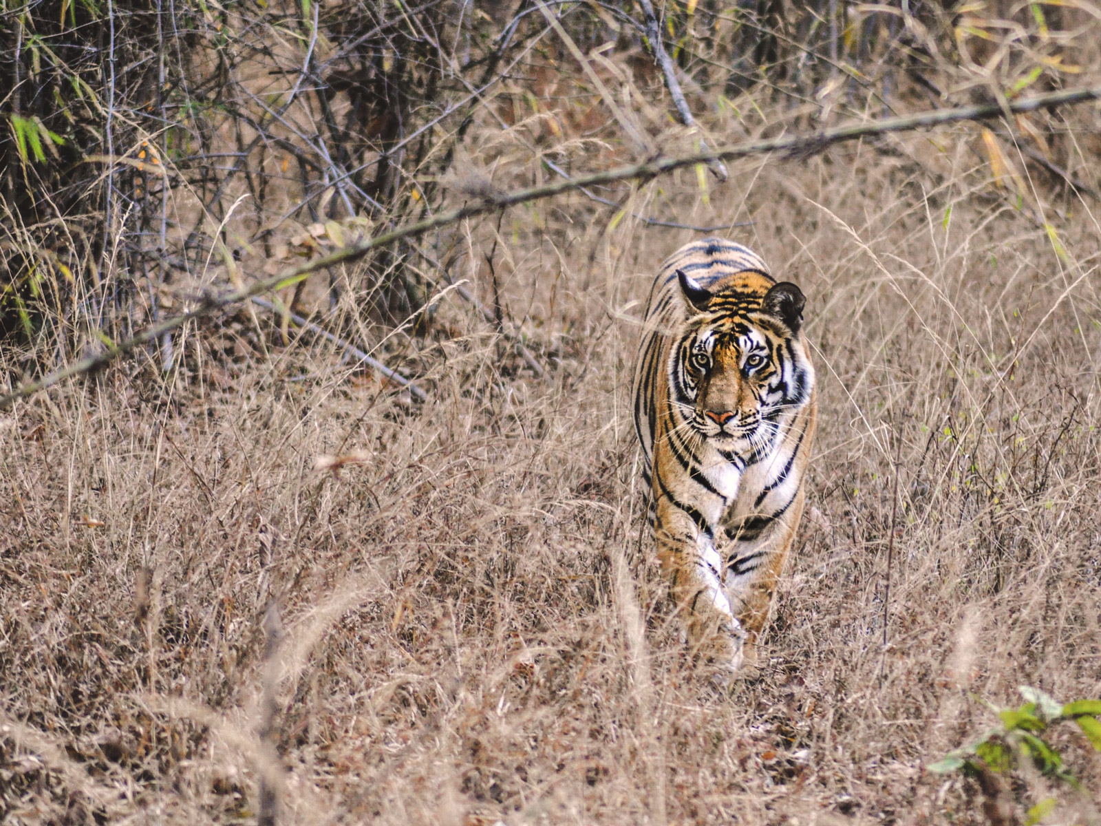 rondreis india bandhavgarh national park hoogtepunt 1