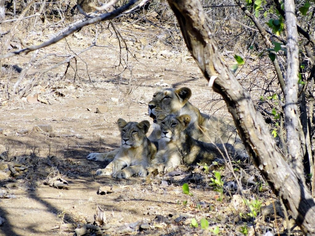 Gir National Park | Rama Tours