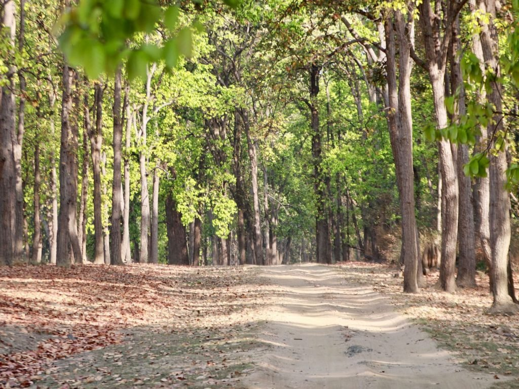 Kanha National Park | Rama Tours