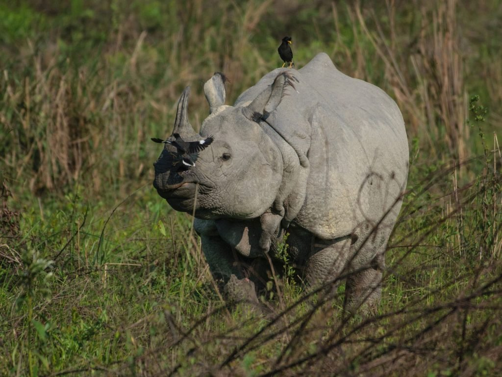 Kaziranga National Park | Rama Tours