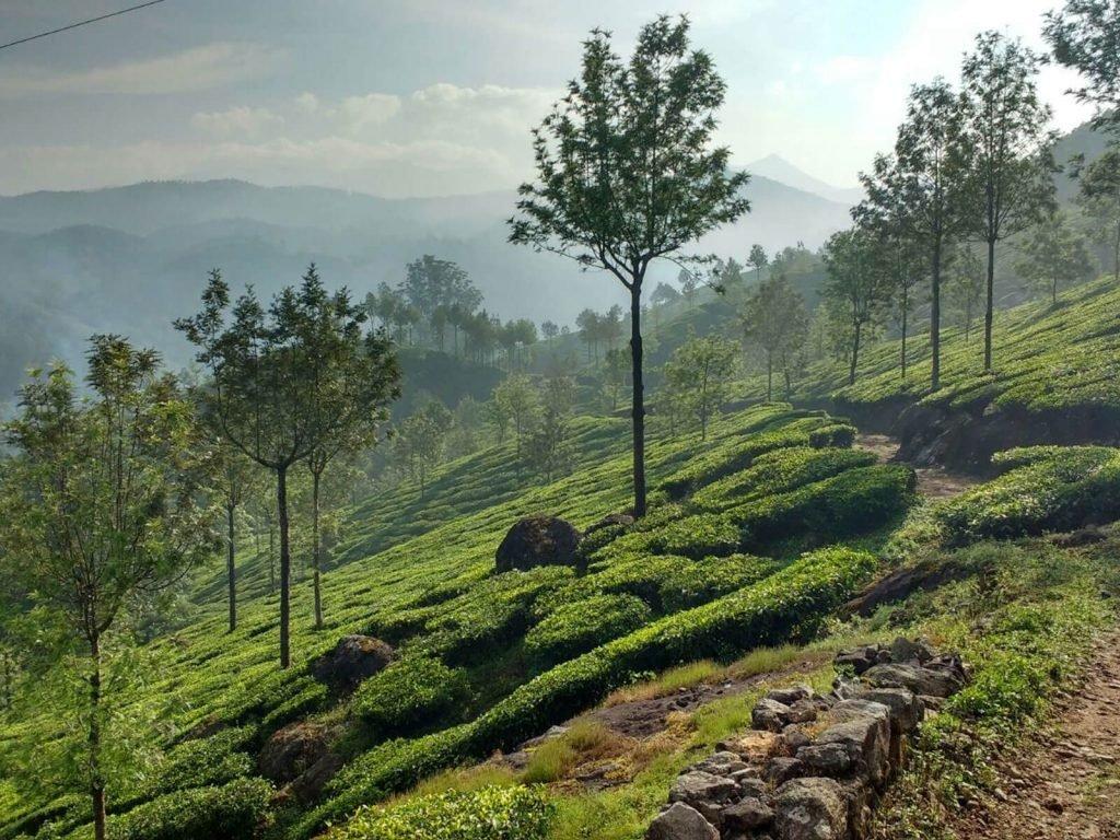 Munnar | Rama Tours