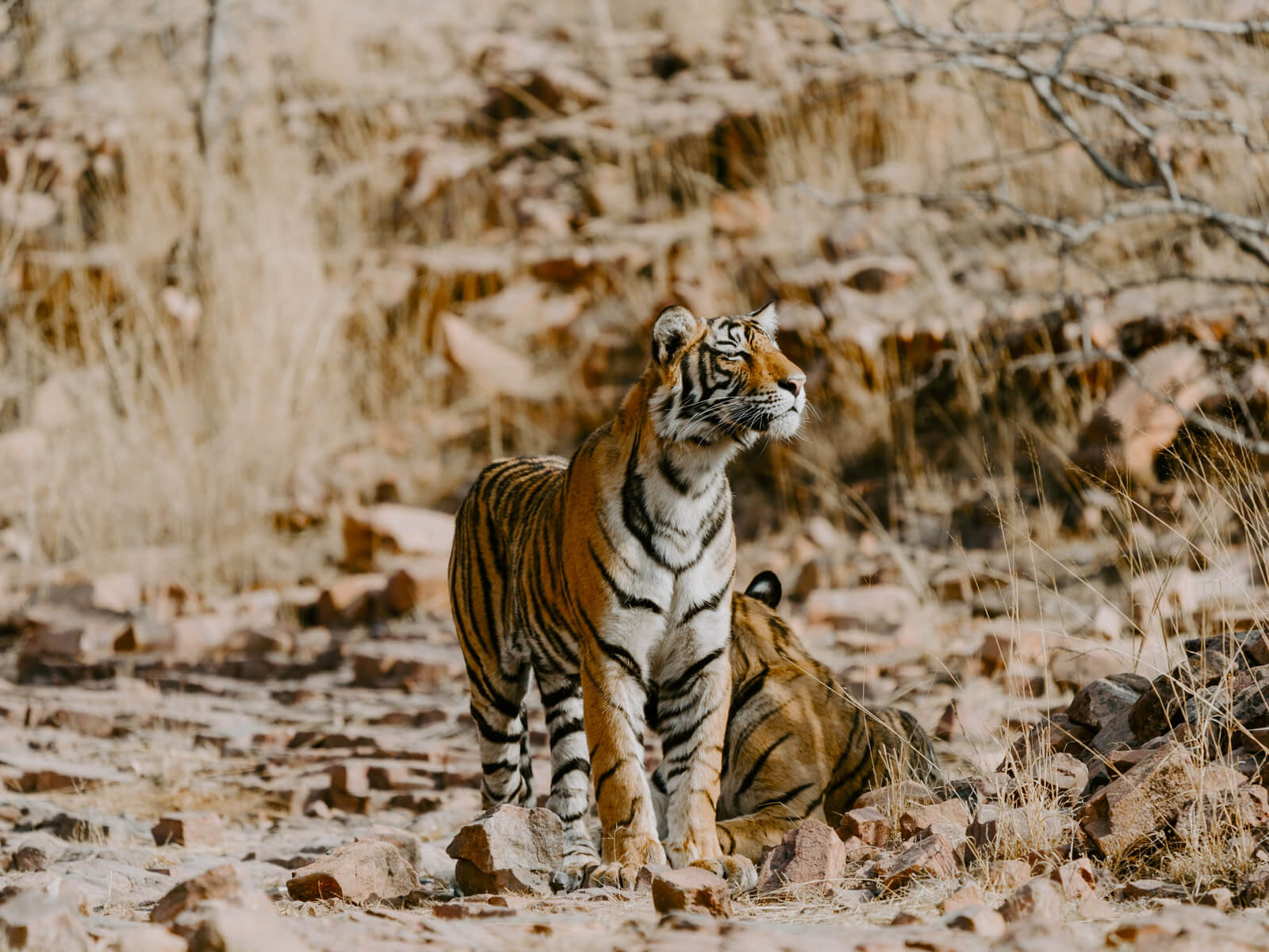 rondreis india ranthambore national park hoogtepunt 11