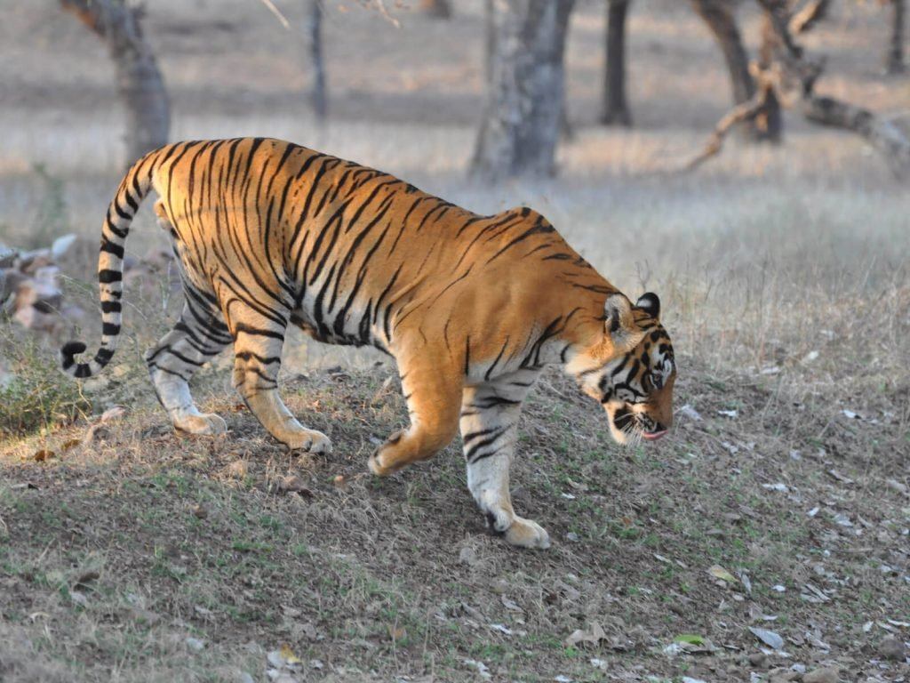 Ranthambore National Park | Rama Tours