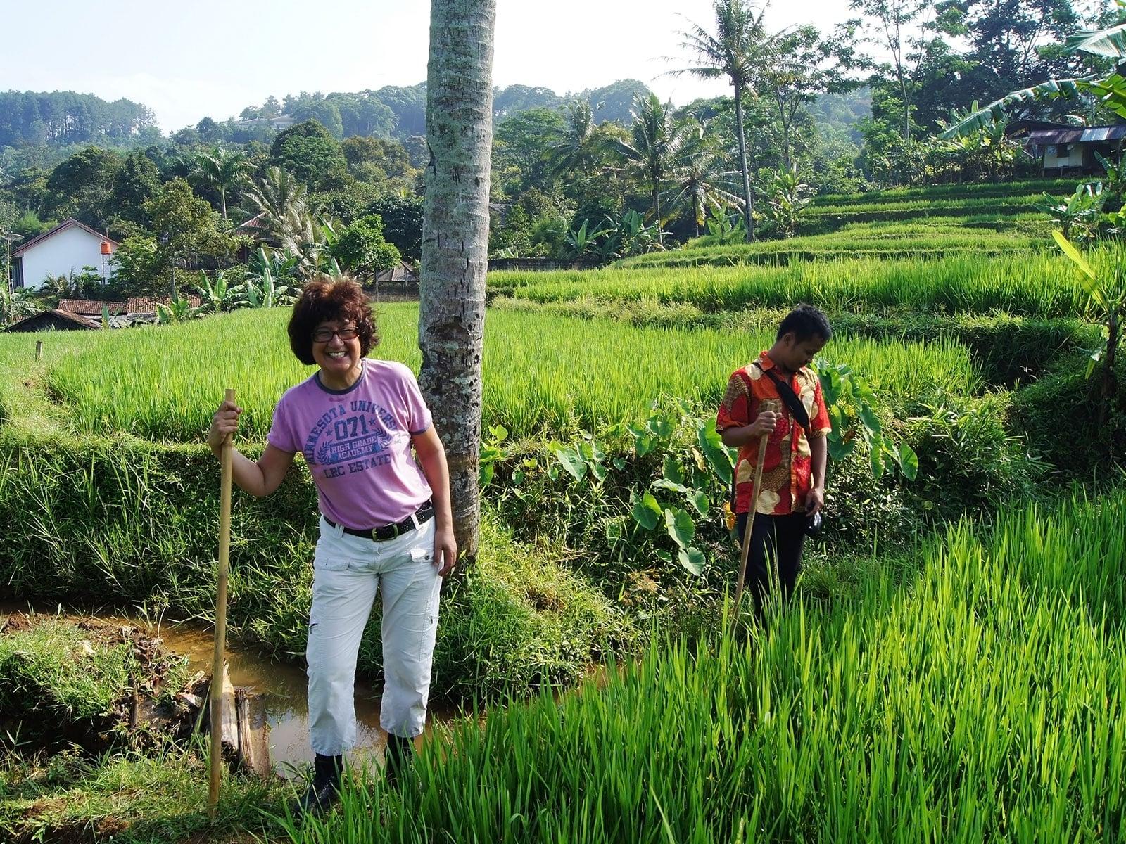 rondreis java bogor hoogtepunt 12 wandeling rijstvelden