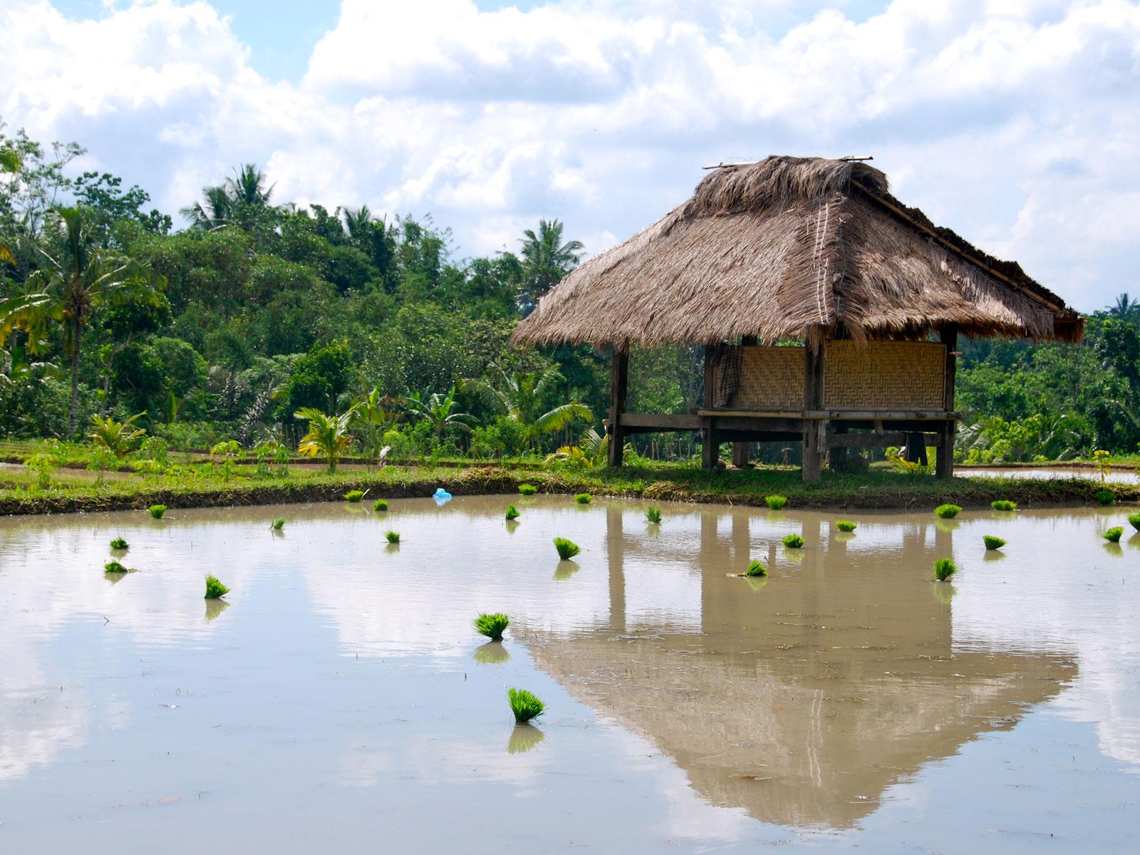 rondreis lombok tetebatu hoogtepunt 1