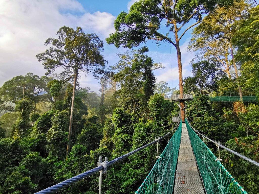 Danum Valley National Park | Rama Tours