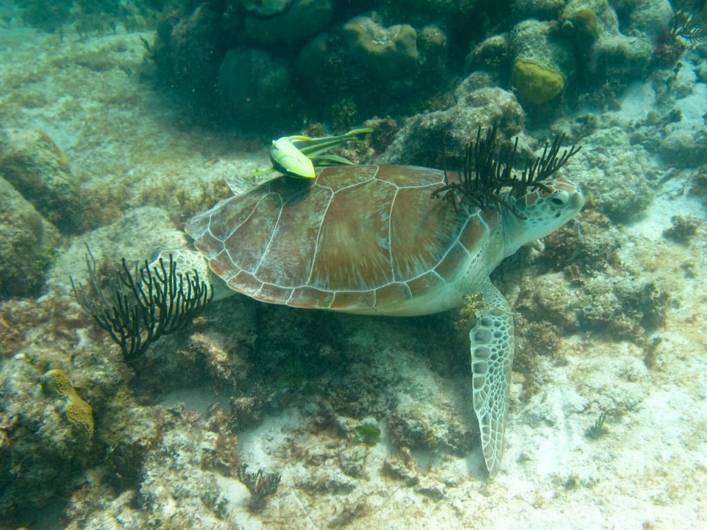 Selingan Island | Rama Tours