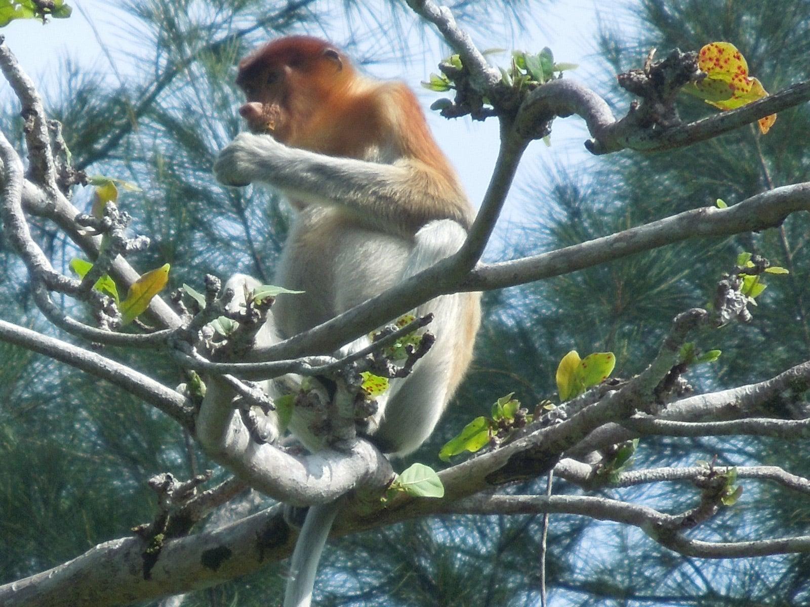 rondreis maleisie sarawak bako national park hoogtepunt 10