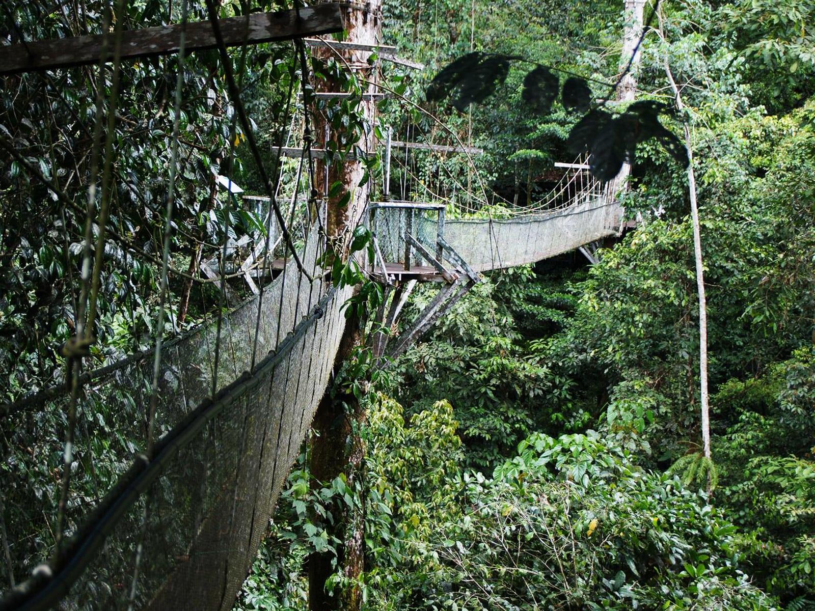 rondreis maleisie sarawak mulu national park 10