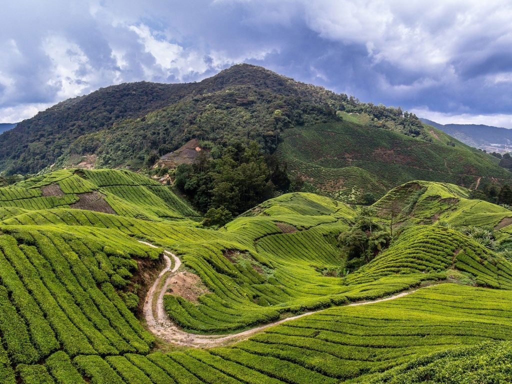 Cameron Highlands | Rama Tours