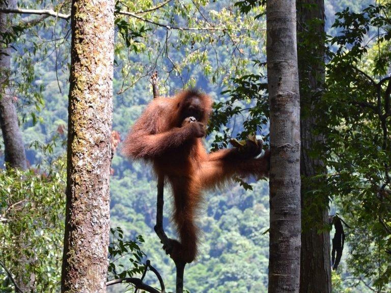 Het groene hart van Noord-Sumatra | Rama Tours
