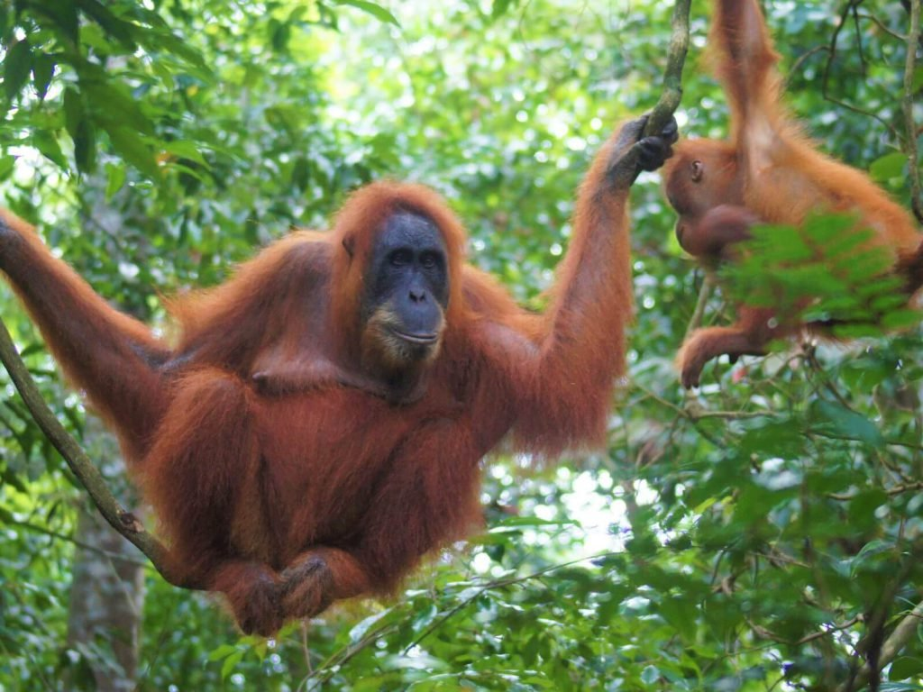 Bukit Lawang | Rama Tours