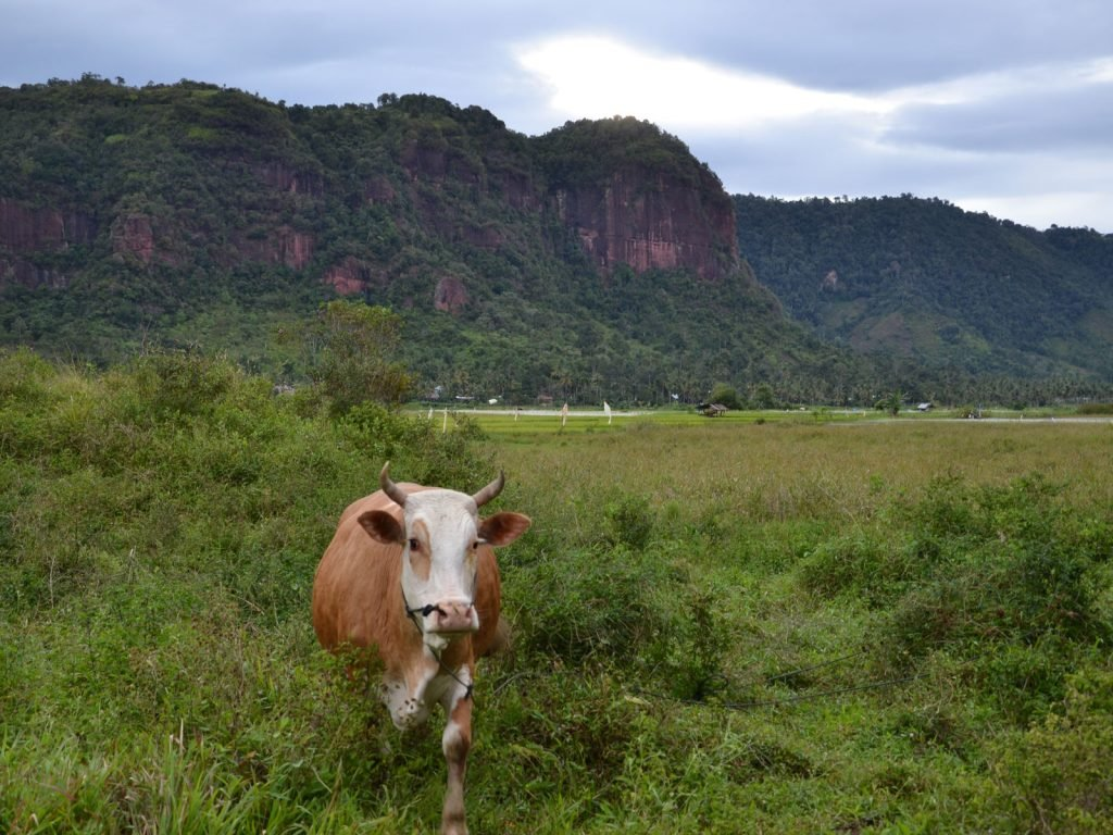 Harau Valley | Rama Tours