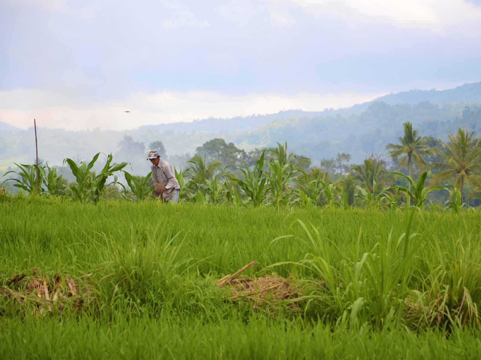 rondreis sumatra kerinci seblat national park hoogtepunt 17