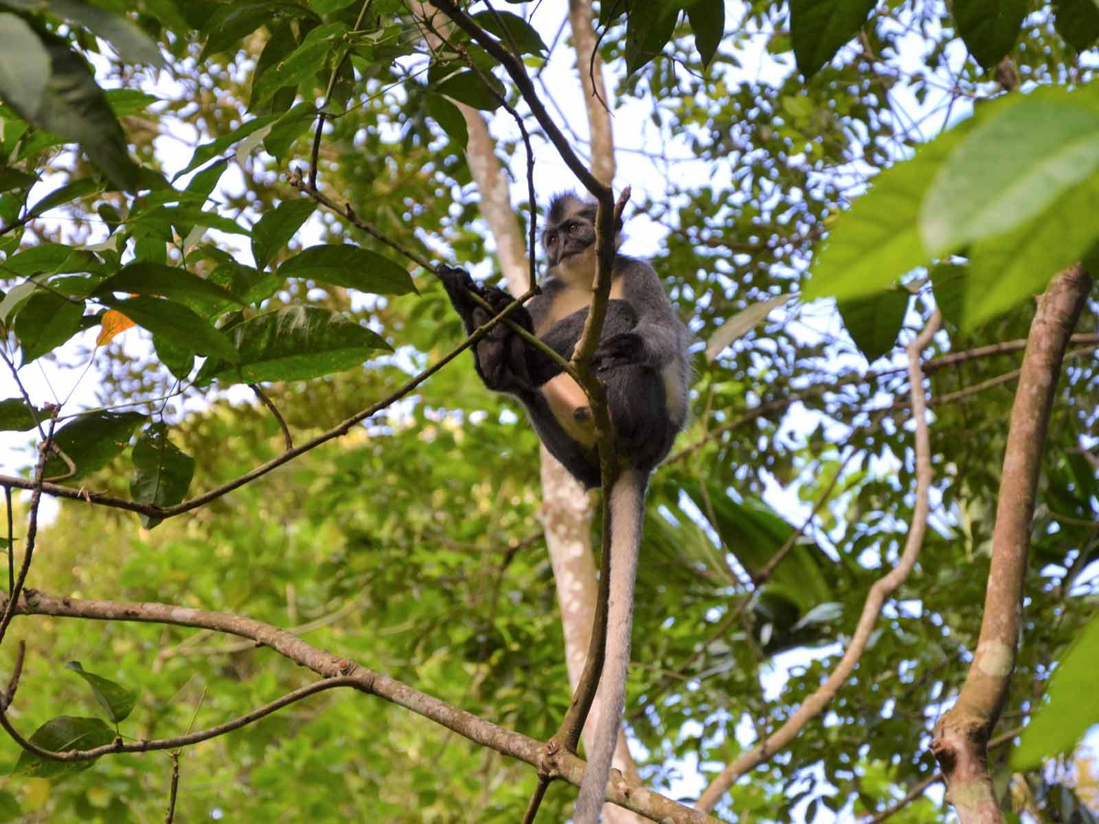 rondreis sumatra kerinci seblat national park hoogtepunt 4