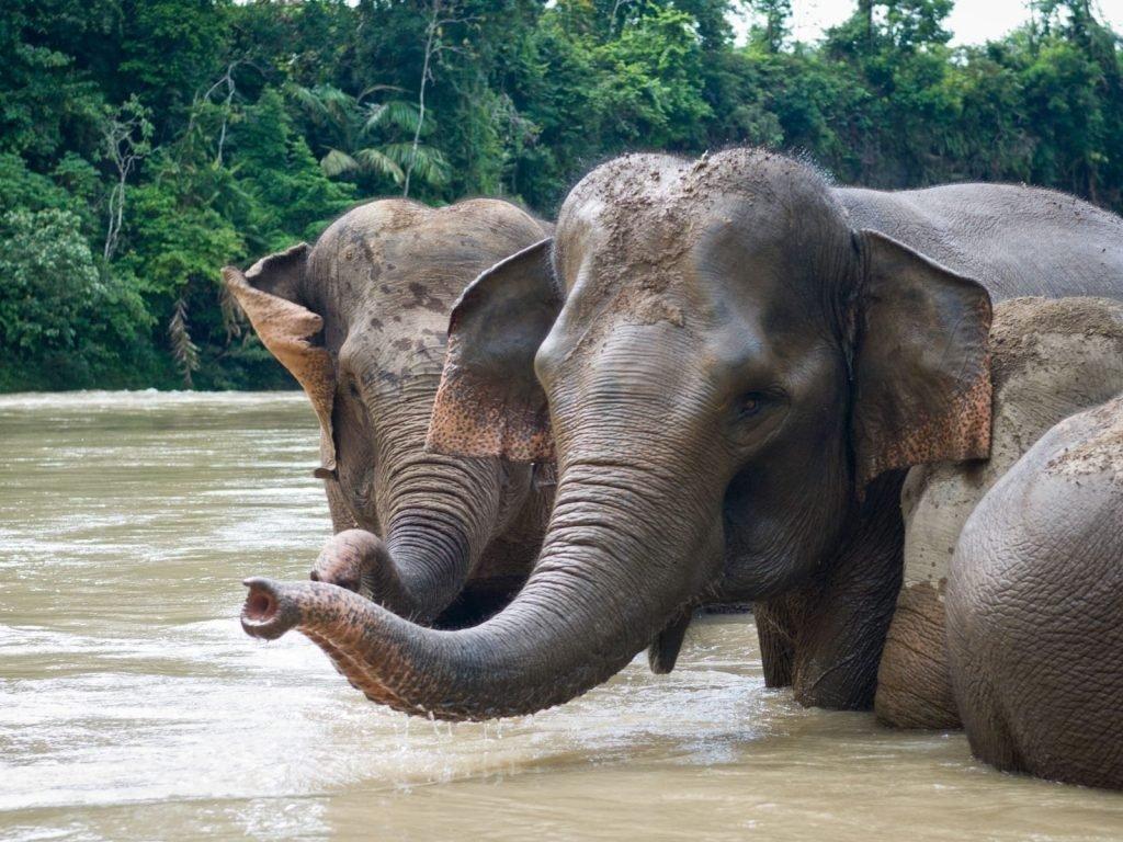 Tangkahan | Rama Tours