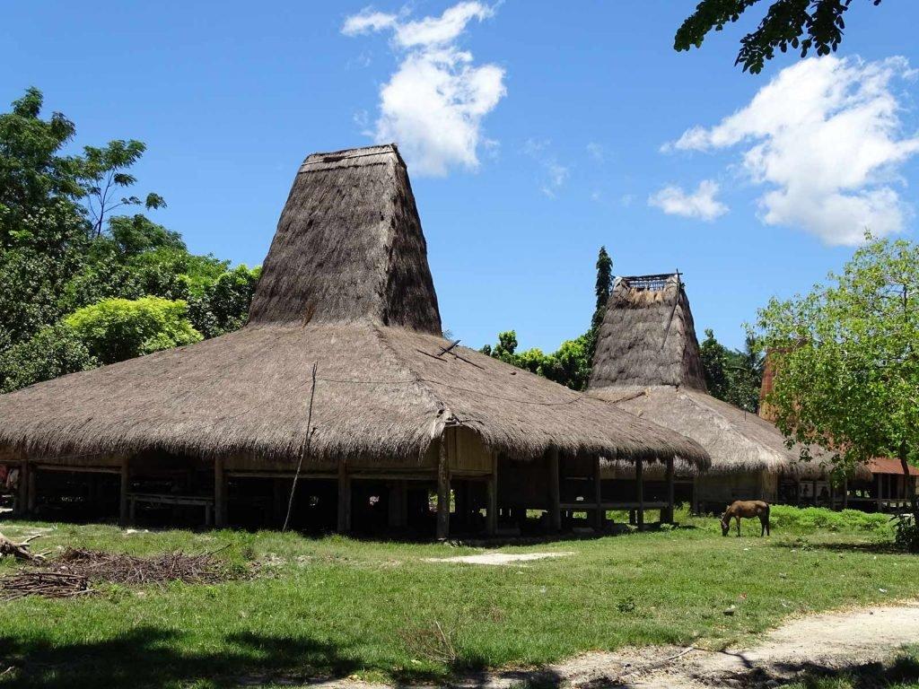 Sumba, Waingapu | Rama Tours