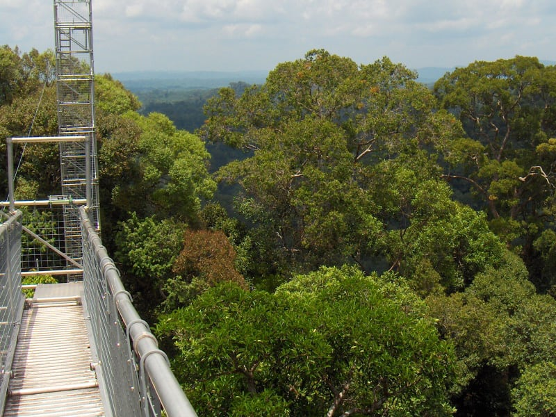Temburong National Park | Rama Tours
