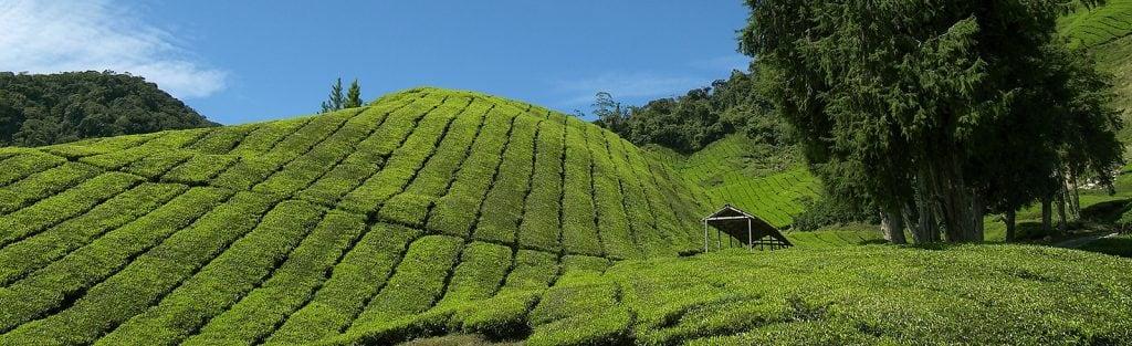 Rondreis Maleisie hoogtepunten West-Maleisie