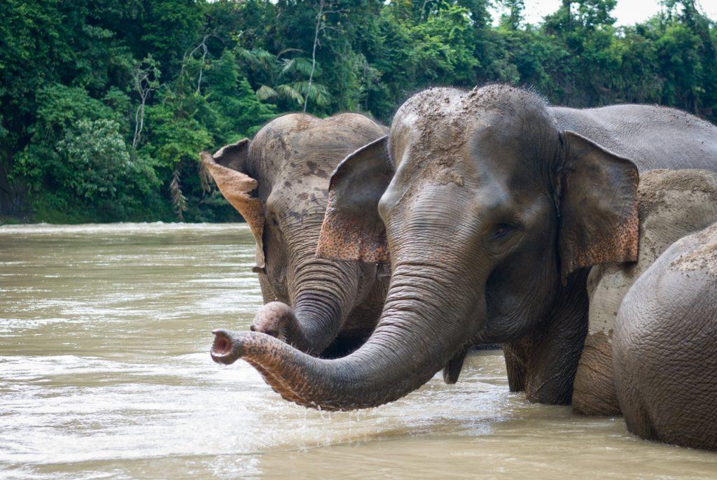 Rondreis Sumatra avontuurlijk