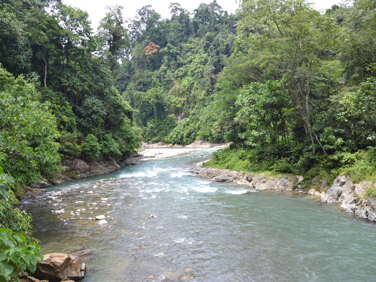 rondreis sumatra eco lodge bukit lawang 4