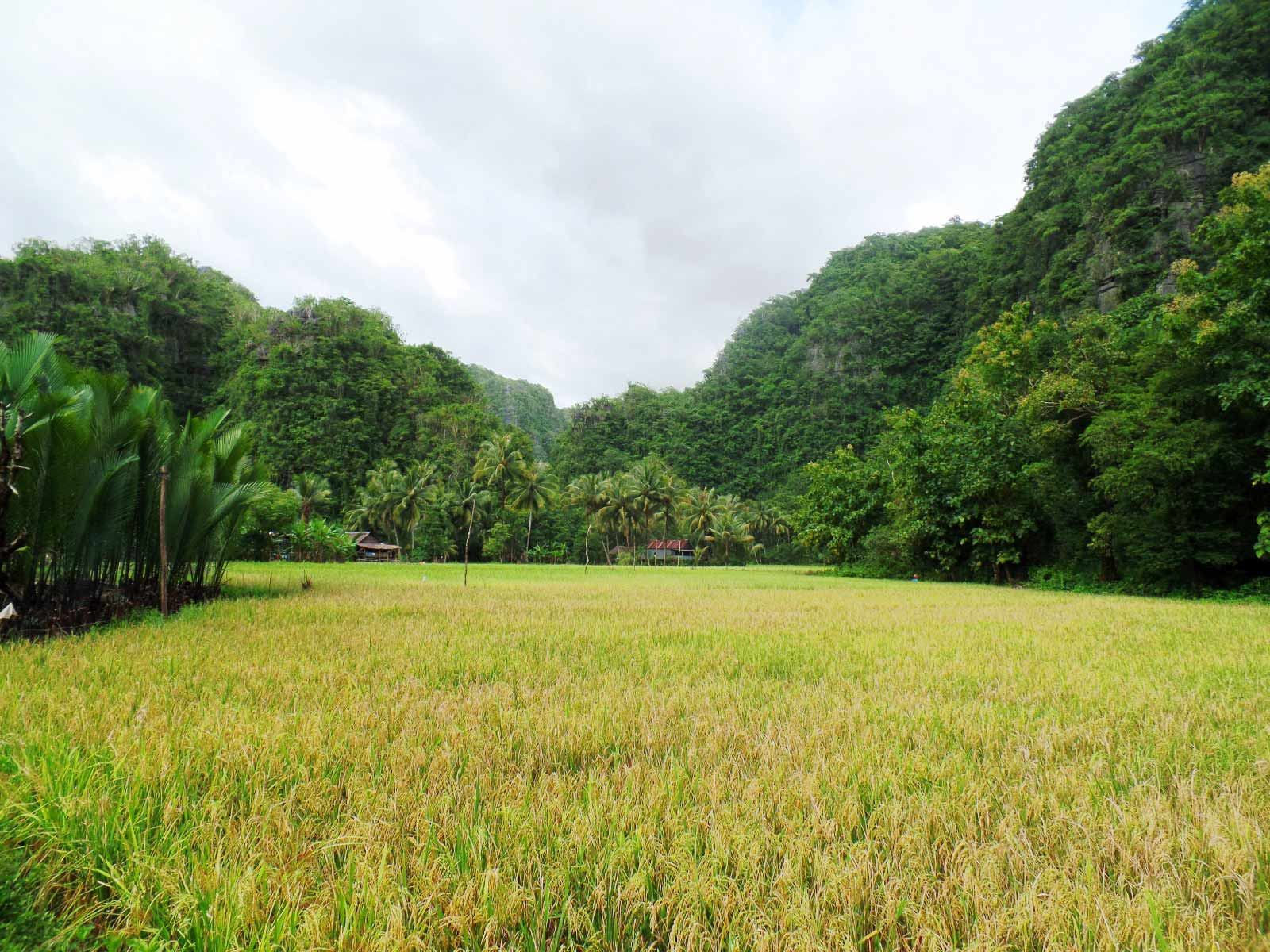 rondreis indonesie sulawesi rammang rammang 3