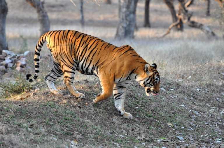 Wildlife in India | Rama Tours