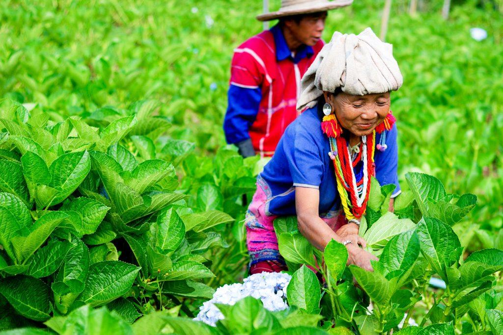 Rondreis Thailand Land van de eeuwige glimlach