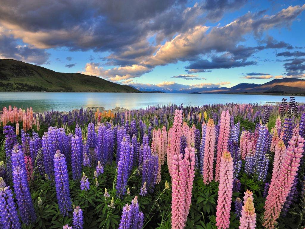Nieuw-Zeeland van noord naar zuid met nadruk op het zuidereiland | Rama Tours