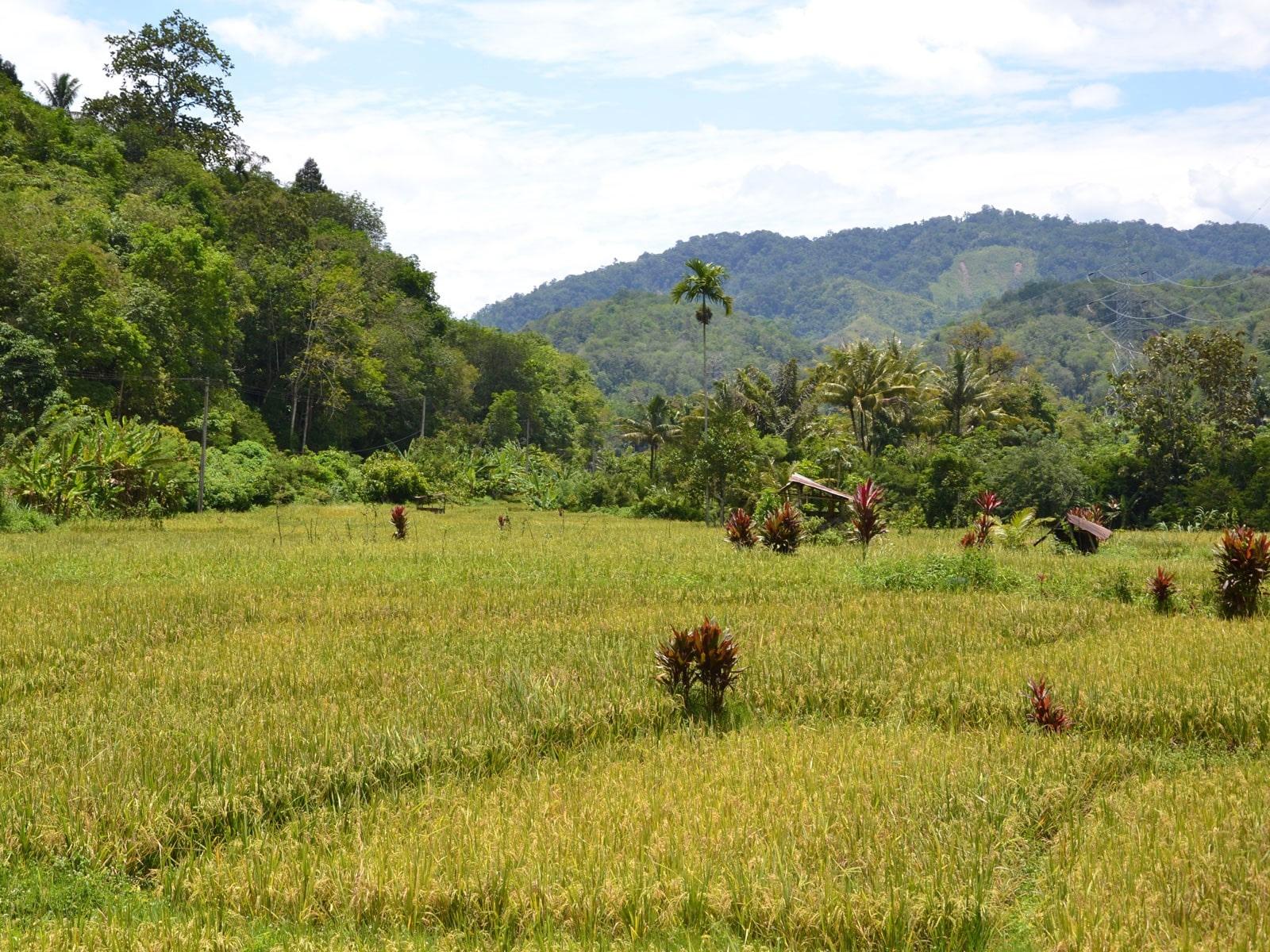 rondreis sumatra sipirok hoogtepunt 13