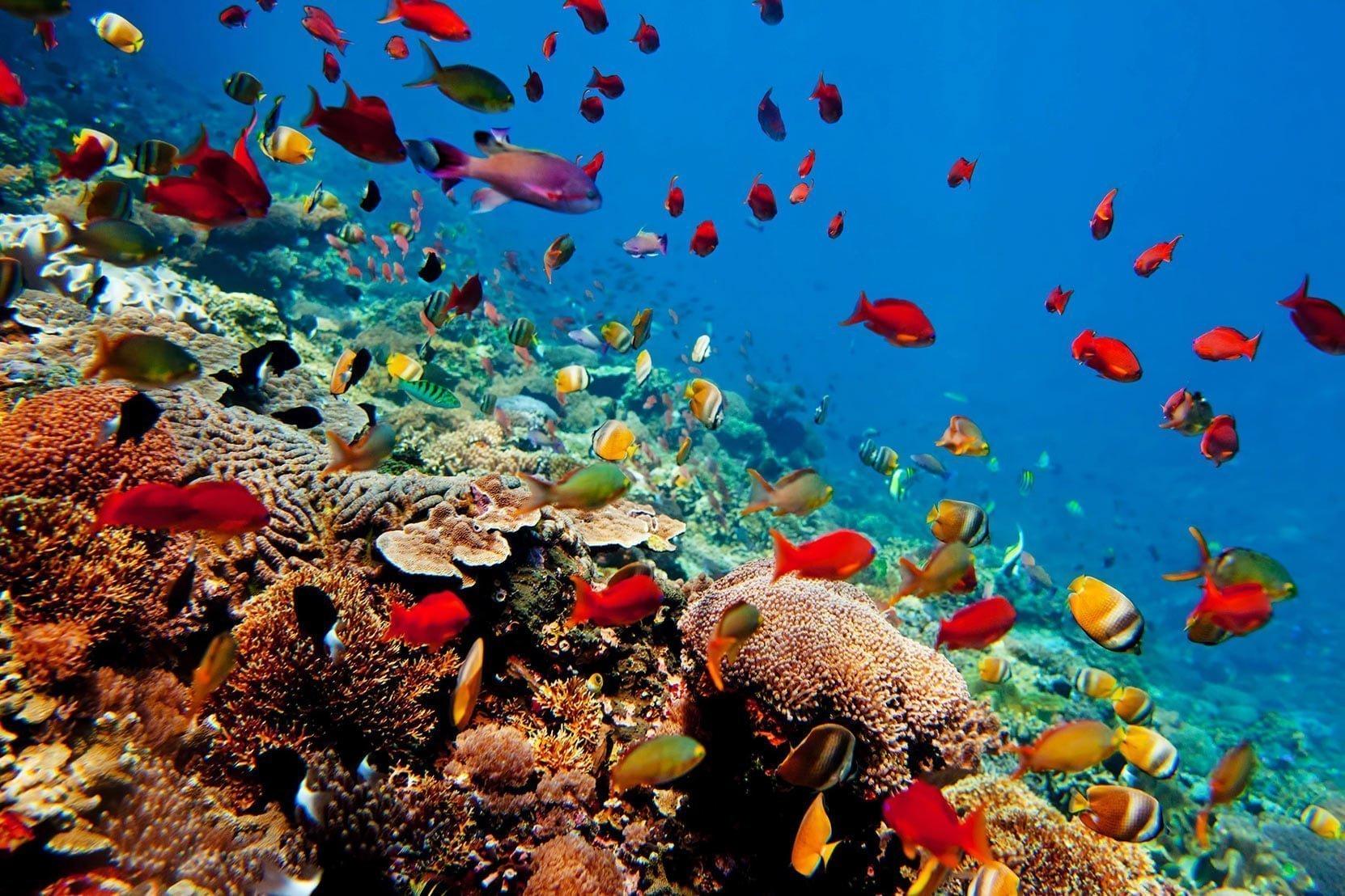 Rondreis Bali duikreis