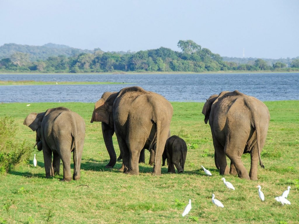 Minneriya National Park | Rama Tours