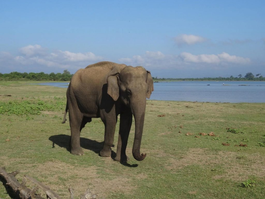 Udawalawe National Park | Rama Tours
