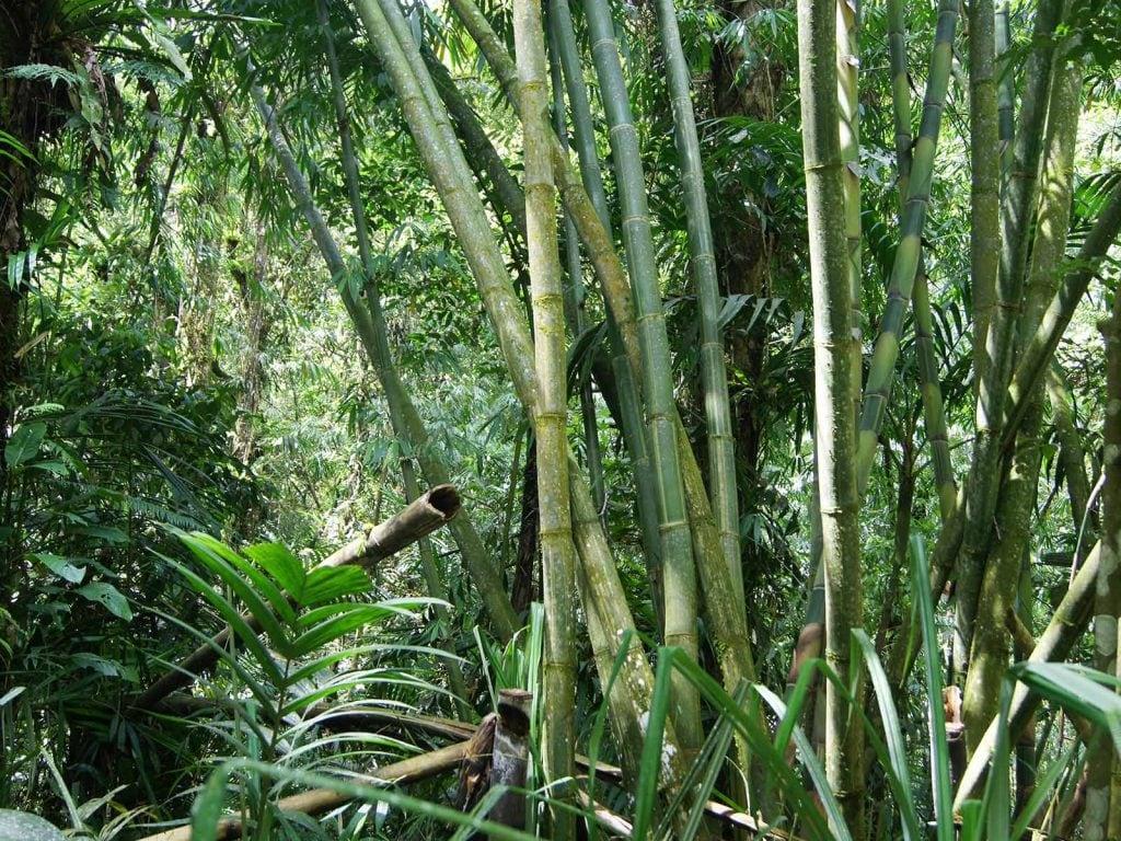 Halimun National Park | Rama Tours