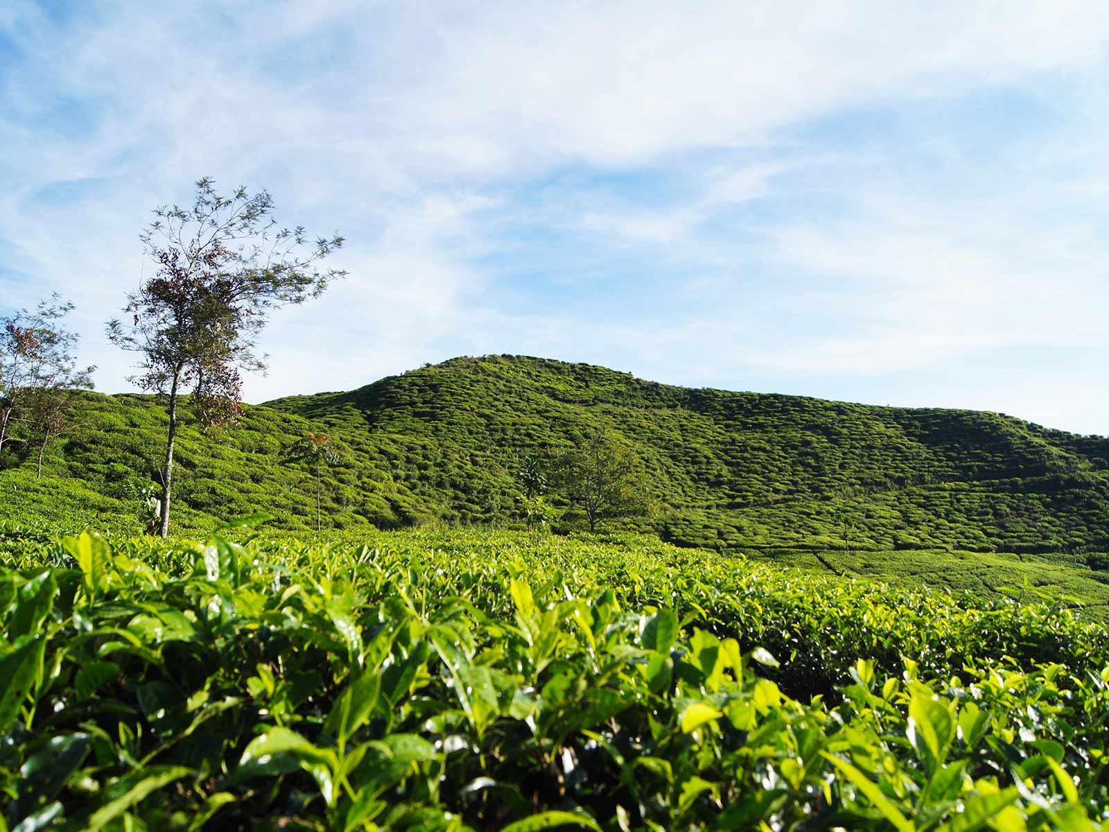 Rondreis Java Halimun National Park 3