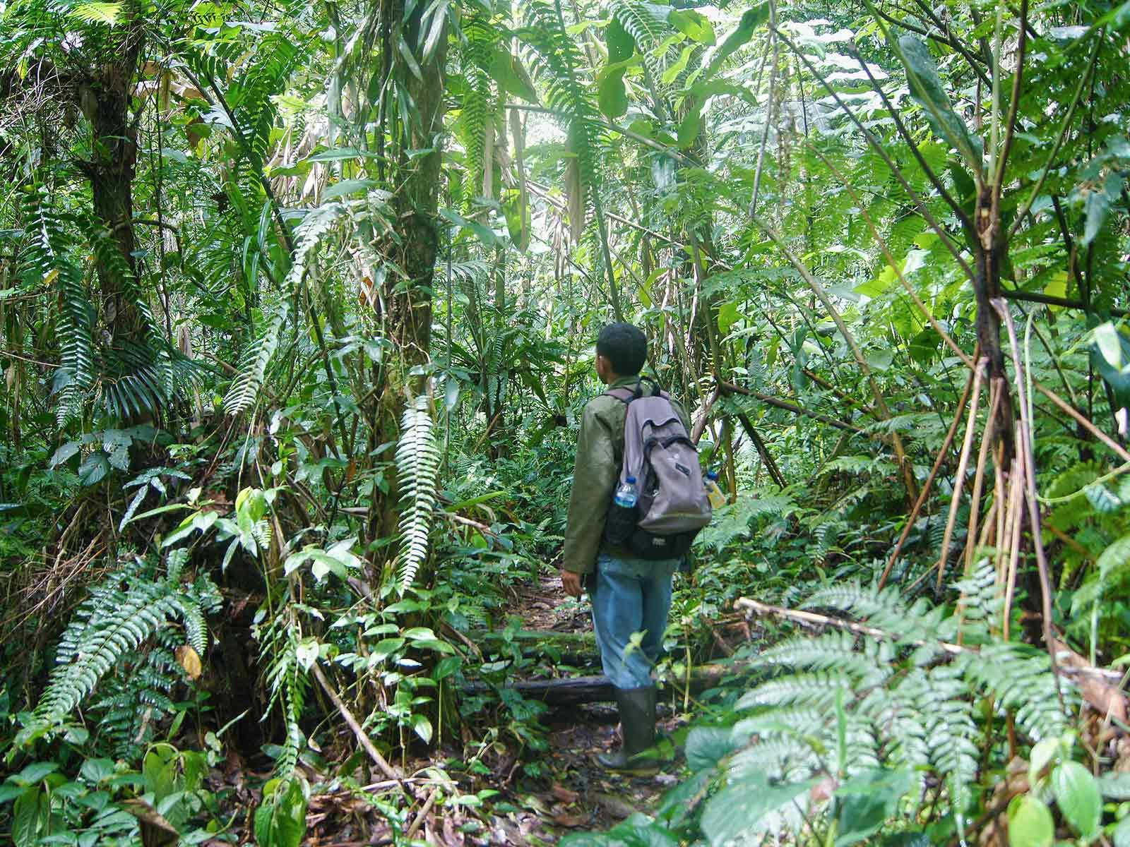 Rondreis Java Halimun National Park 7