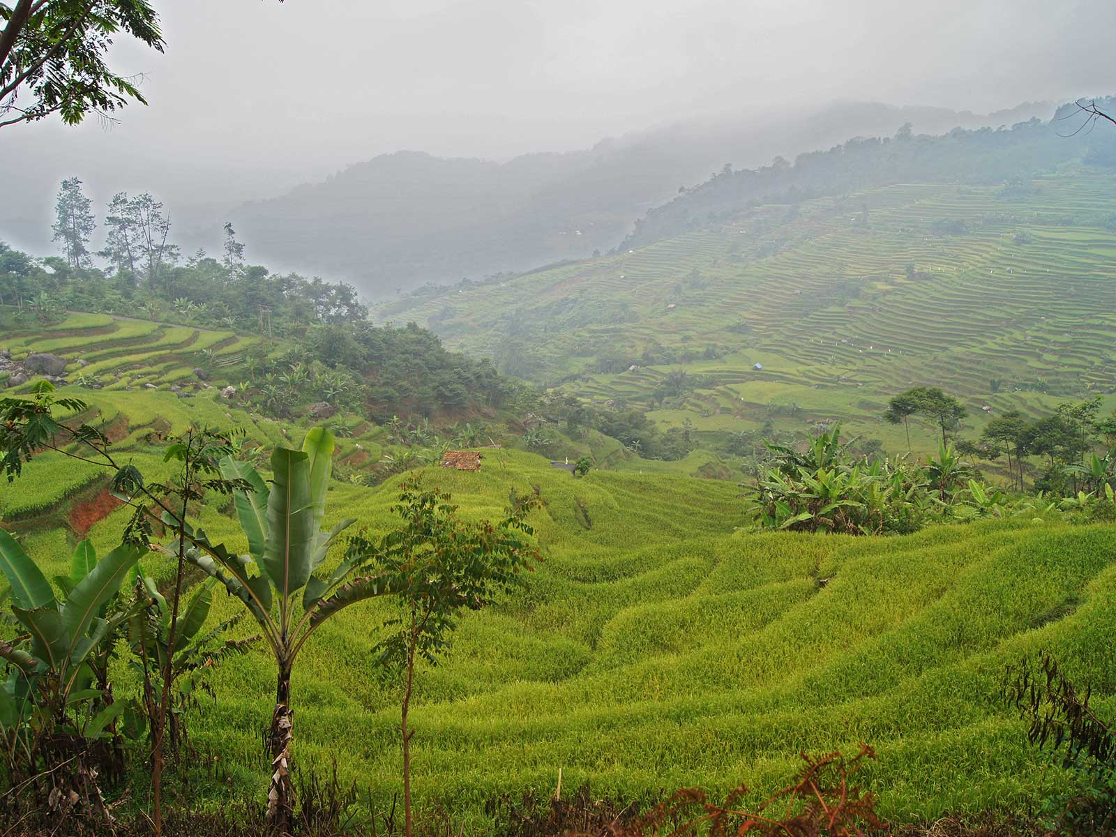 Rondreis Java Halimun National Park 8