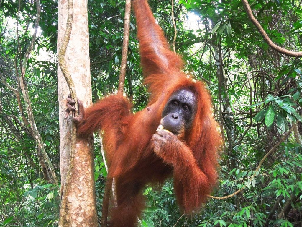 Rondreis Sumatra Java en Bali Verrassend