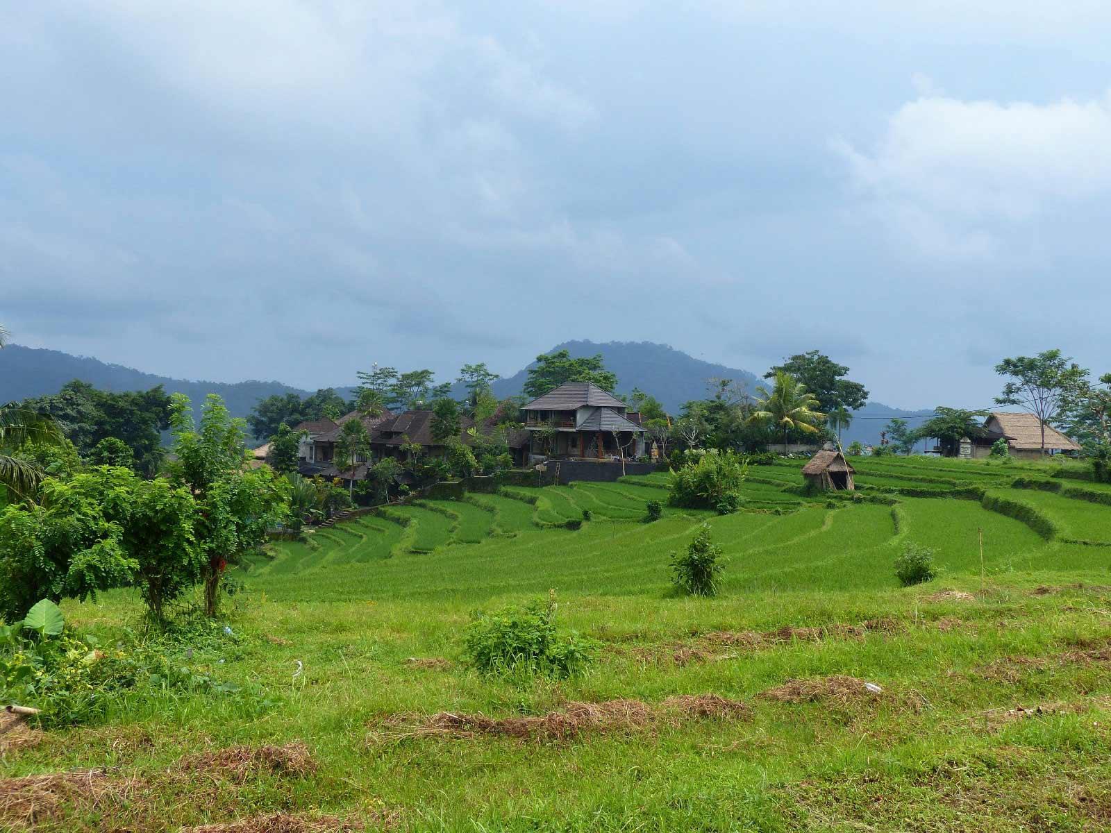 Rondreis Bali Sidemen Sawah Indah 9