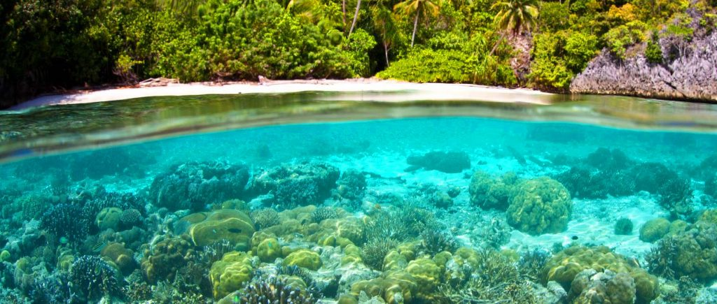 Papua onder de zeespiegel | Rama Tours