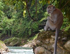 Avontuurlijk Sumatra: jungle trekking | Rama Tours Holland