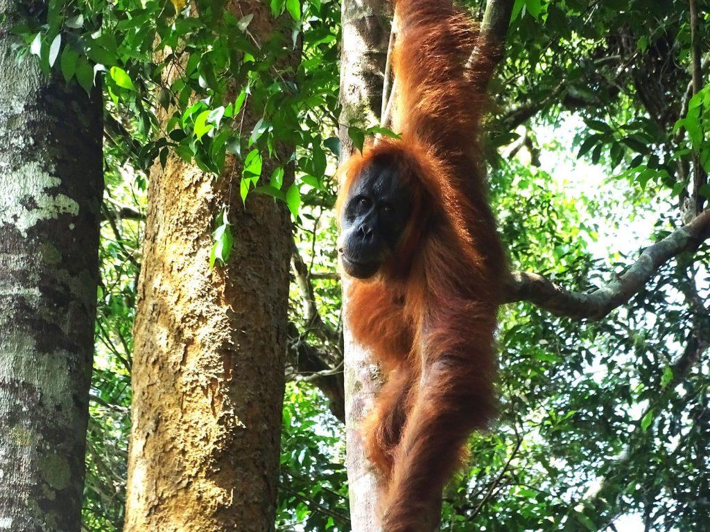 reisspecialist shilla verburgt favoriete fotos sumatra