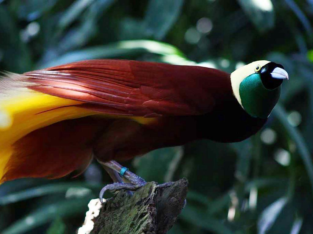 Papua, op zoek naar de paradijsvogel | Rama Tours