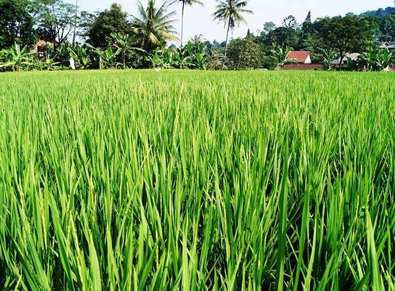 recensie reis java 10 april 2018 rijstvelden