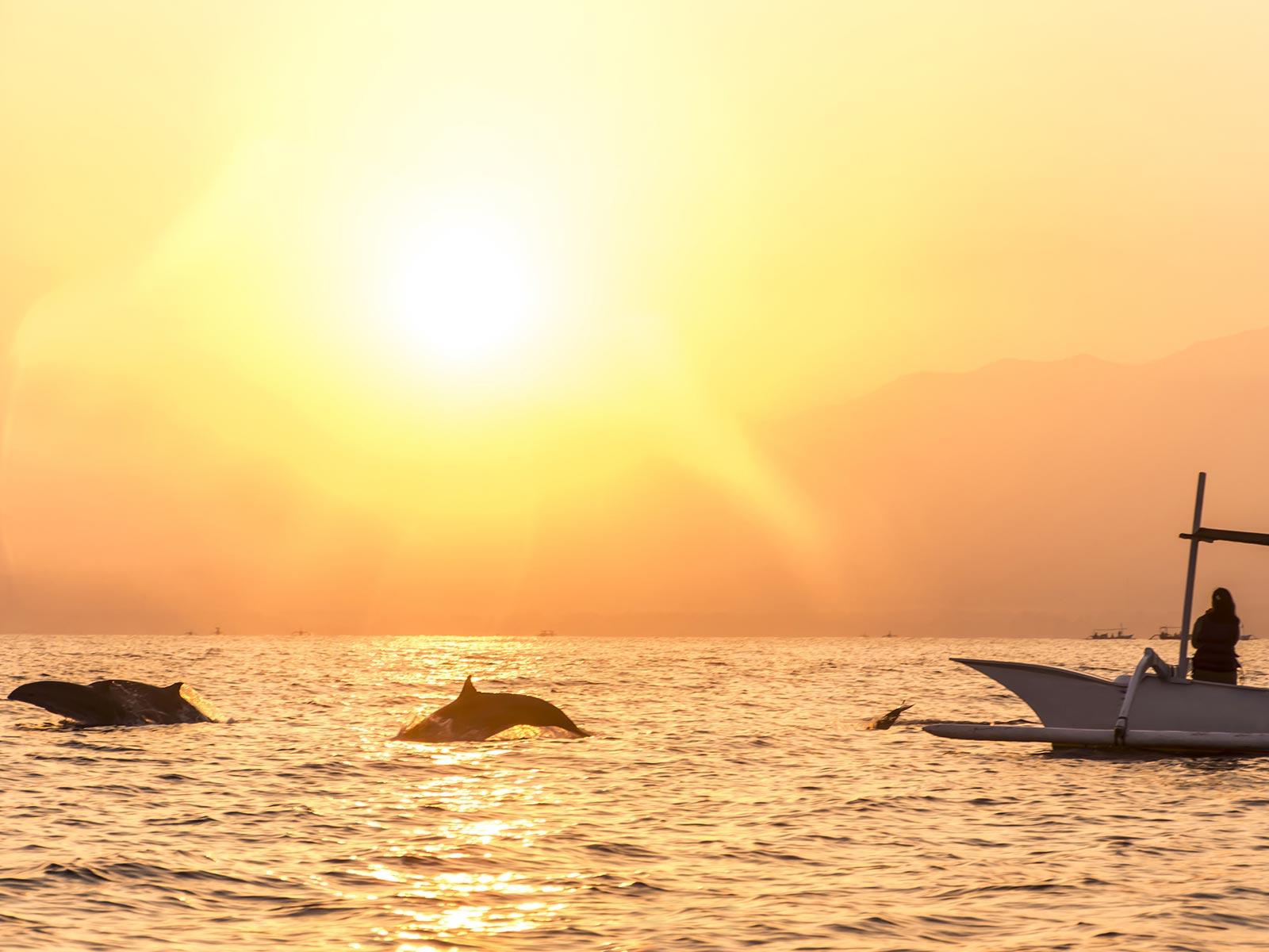 tips voor duurzaam toerisme dolfijnen lovina bali