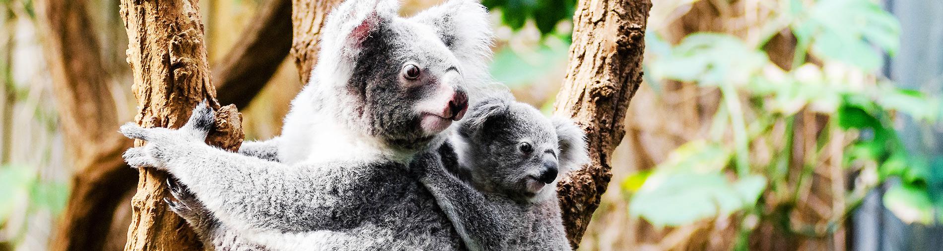 rondreis australie hoogtepunten